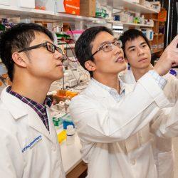 Forscher entdecken neue Sicherheitslücke bei Nierenkrebs