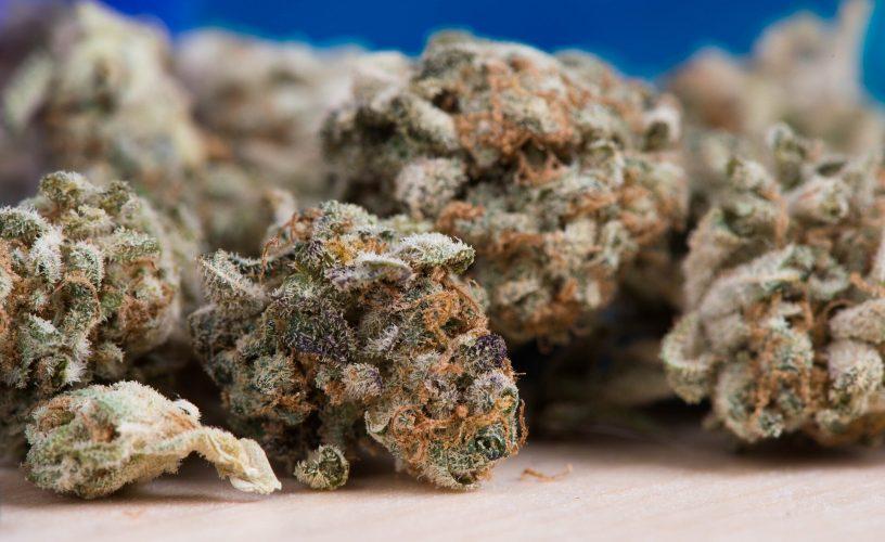 Studie zeigt den Einfluss der elterlichen Marihuana-Exposition auf das Gehirn des Nachwuchses