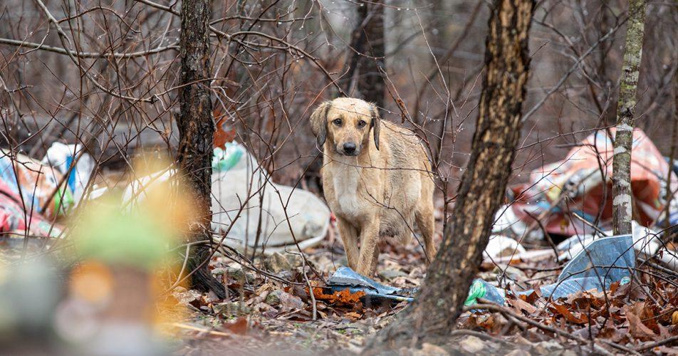 ASPCA Entfernt 29 Hunde von Arkansas-Eigenschaft