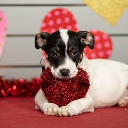 "Spread Mehr ""Puppy Love"" am Valentinstag"