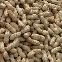 Co-Behandlungen, die helfen, schlagen Erdnuss-Allergien