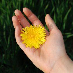 Fünf Dinge zu wissen, über das einfrieren von Eizellen