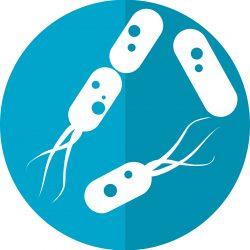 Darm-Bakterien-Interaktionen mit dem Immunsystem zugeordnet