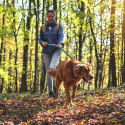 Hunde richtig vor Zecken schützen