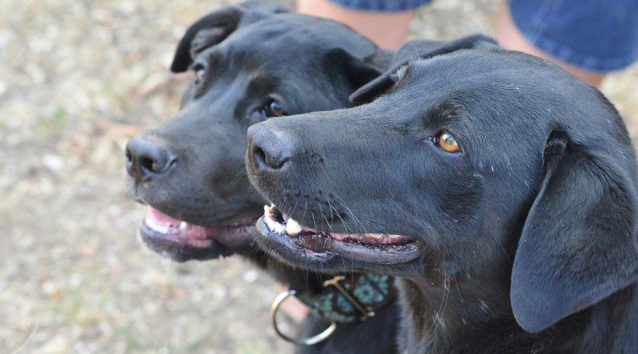Gebäude-Bindungen und Vertrauensvolle Beziehungen mit Ihren Haustieren zu Holen! Pet Care