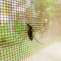 Neuartige Verbindung, die die Funken neue malaria-Behandlung hoffen