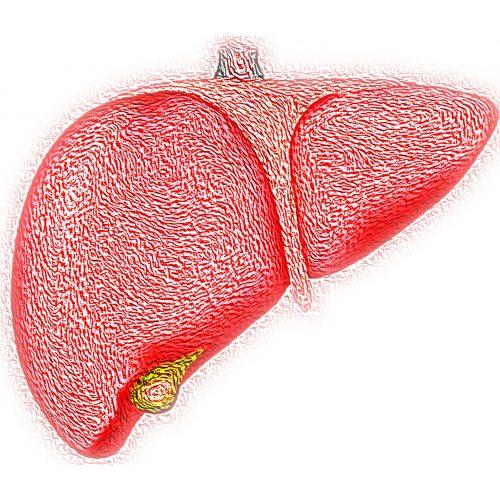 Potential frühzeitig biomarker zu verfolgen, die Entwicklung von nicht-alkoholischer Fettleber-Erkrankung