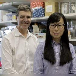 Verständnis der Alzheimer-Zelle durch Analyse-und sex-spezifische Forschung