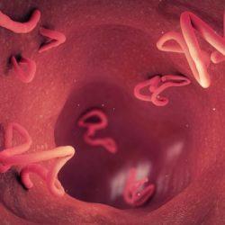Allergie: Neuer Larven-Wirkstoff soll bei Asthma helfen – Effektiver als Kortison – Naturheilkunde & Naturheilverfahren Fachportal