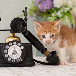 Was ist zu Erwarten Beim Aufruf ASPCA Animal Poison Control Center