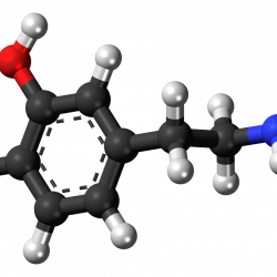 Forscher entdecken eine neuartige Rolle für Dopamin, die Auswirkungen der gen-expression bezogen auf Kokain-Missbrauch