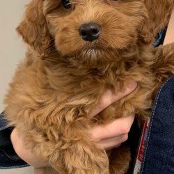 "Therapie-Hunde können helfen, senken Notfall-ärzte "" stress"