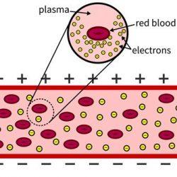Engineer verwendet die mechanische Beständigkeit zu erkennen, Schäden an roten Blutkörperchen