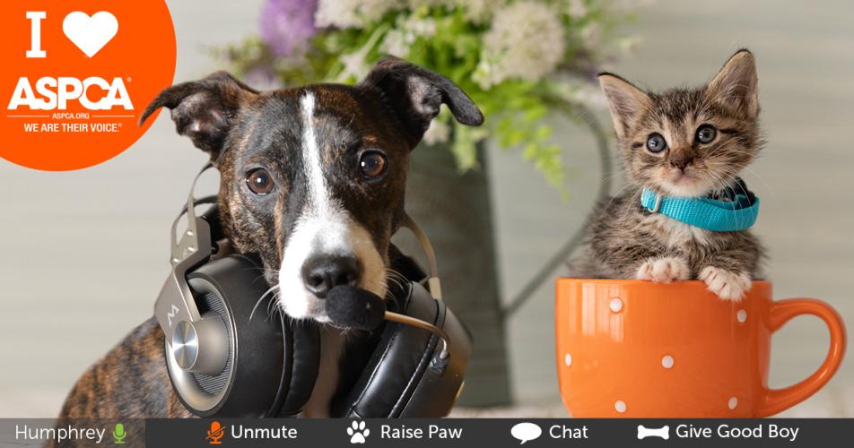 Kostenlose Download-ASPCA Virtuelle Meeting-Hintergründe