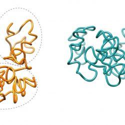 3-D Form des menschlichen Genoms essentiell für eine robuste entzündliche Antwort
