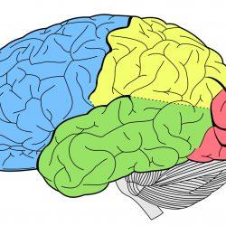 Fehlerhafte Gehirn die Verarbeitung von neuen Informationen zugrunde liegt, psychotische Wahnvorstellungen, findet neue Forschung