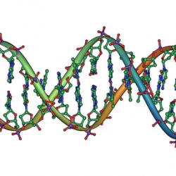 Studie links Endometriose zu DNA-Veränderungen