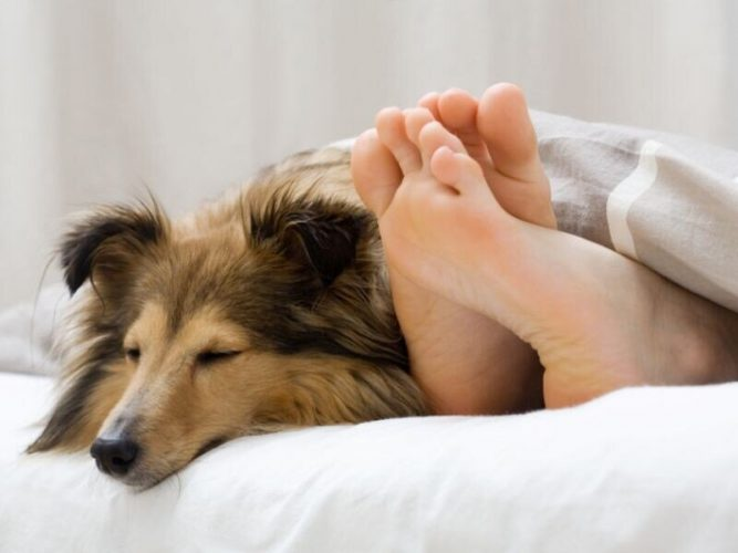 Wie hilfreich sind die support-Hunde für Kinder mit Autismus?