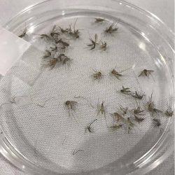 Mücken-Fliegen-frei wie der Fachbereich Gesundheit den Fokus auf virus