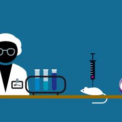 Wie wird eigentlich ein Medikament entwickelt?