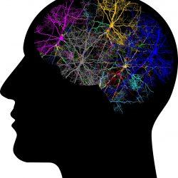 Studie zeigt, wie unser Gehirn aktiv bleiben, während vertraute, sich wiederholende Aufgaben