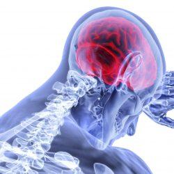 Gehirn strukturelle Elemente bei psychiatrischen Erkrankungen