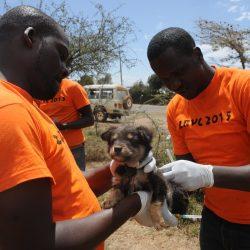 Breitensport Hund Impfungen können helfen, zu stoppen Tollwut, aber nicht allein