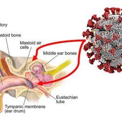 Haben Sie schon gehört? Mittelohr, mastoid-harbor-SARS-Cov-2 und stellen möglicherweise das Risiko für medizinisches Personal