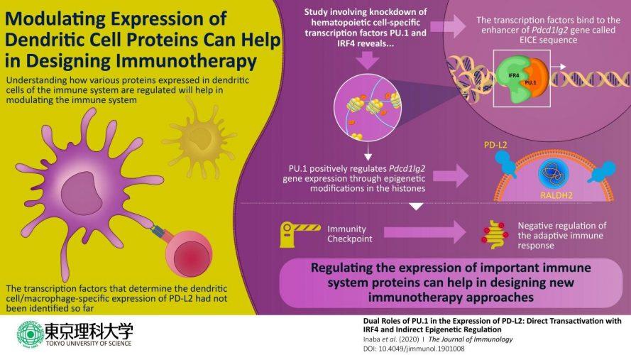 Wie der regler reguliert wird: Einblick in immune-related protein besitzt therapeutischen Wert