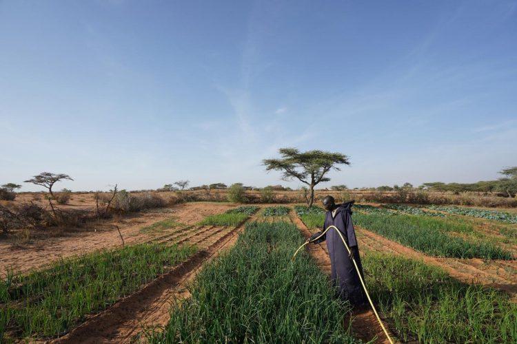 Pestizide, die Geschwindigkeit der Ausbreitung der tödlichen wasserassoziierter Krankheitserreger