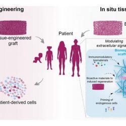 Regeneration des Körpers von innen mit Biomaterialien