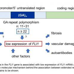 Erstreckt sich wiederholenden DNA-bereiten auf systemische Sklerose