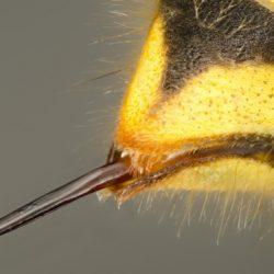 Was hilft bei Wespenstichen?