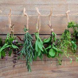 Natürliche Alternativmedizin: 9 Heilpflanzen für jede Hausapotheke