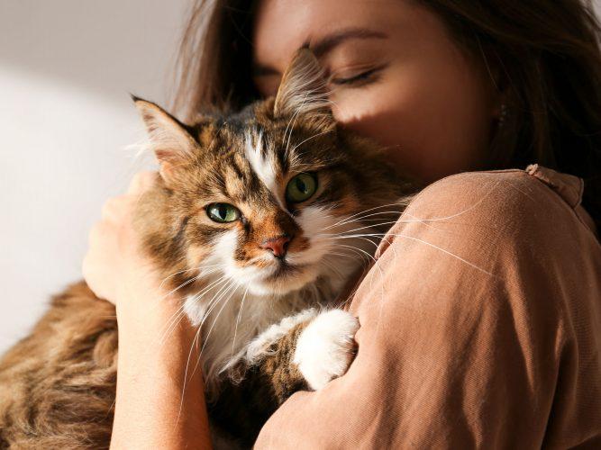 Auch Katzen bekommen Herzerkrankungen