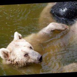Kein Teich zum Reinspringen zur Hand? Diese Tricks bringen Abkühlung